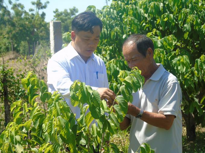 Người tiên phong trồng mãng cầu Thái ở Ninh Thuận