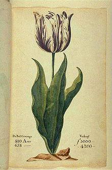 Hội chứng hoa Tulip, nhìn sang giá những giỏ lan tiền tỉ ở Việt Nam